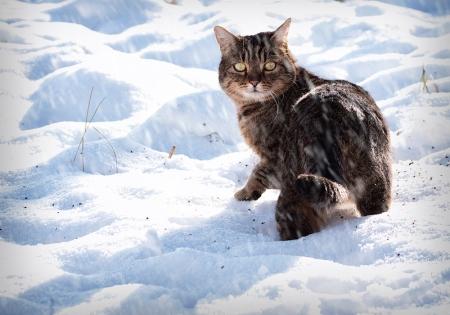 Conor the snow cat