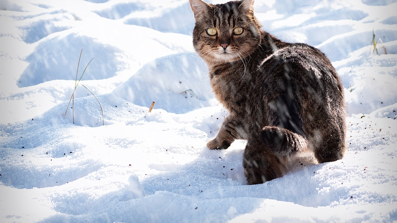 Conor the snow cat